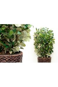 Изгородь лиственная искусственная (без кашпо) 65 х 100 см
