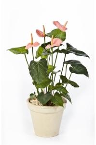 Антуриум куст Де Люкс искусственный нежно-розовый без кашпо 45 см