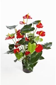 Антуриум Де Люкс большой куст искусственный красный в кашпо 75 см