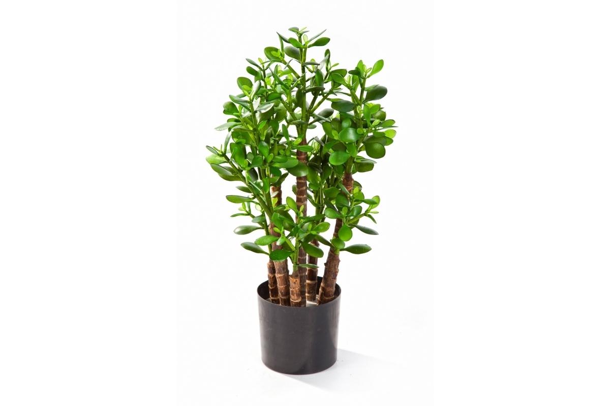 Красула (Денежное дерево) искусственная 60см