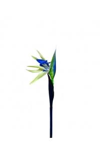 Стрелиция синяя с белым 80 см (Real Touch)