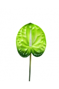 Антуриум искусственный зеленый 77 см