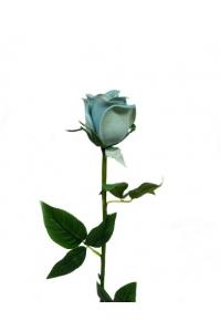 """Роза """"Porcelain"""" голубая искусственная 62 см (Real Touch)"""