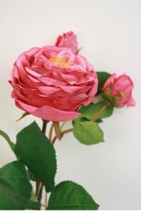 Роза спрей