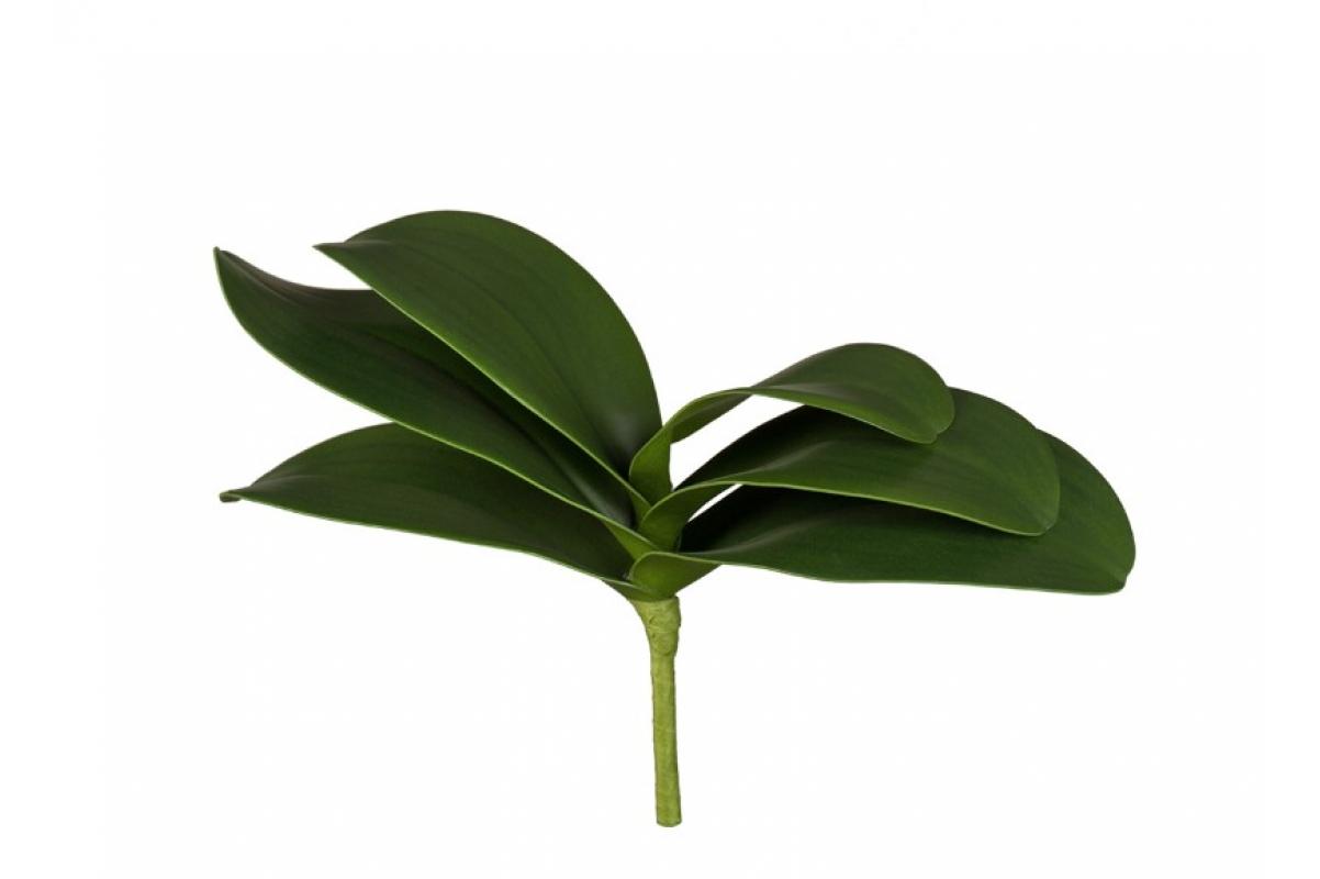 Листья Орхидеи Фаленопсис мини искусственные зеленые 17 см