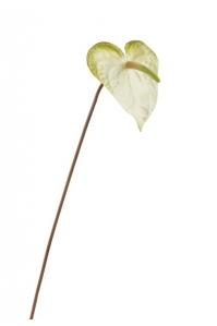 Антуриум искусственный бело-зеленый 53 см