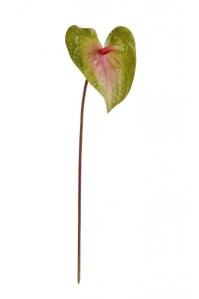 Антуриум Макс искусственный зелено-розовый 56 см