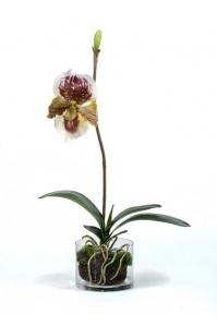 Орхидея Венерин башмачок в стекле с мхом, корнями, землей искусственная бургундия (Real Touch)