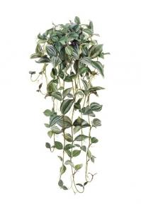 Традесканция Фроузен припыленная ампельная бело-зеленая 80 см