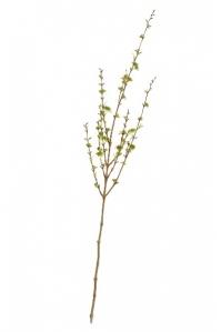 Ветка Корнелиан Черри искусственная малая светло-зеленая 105 см