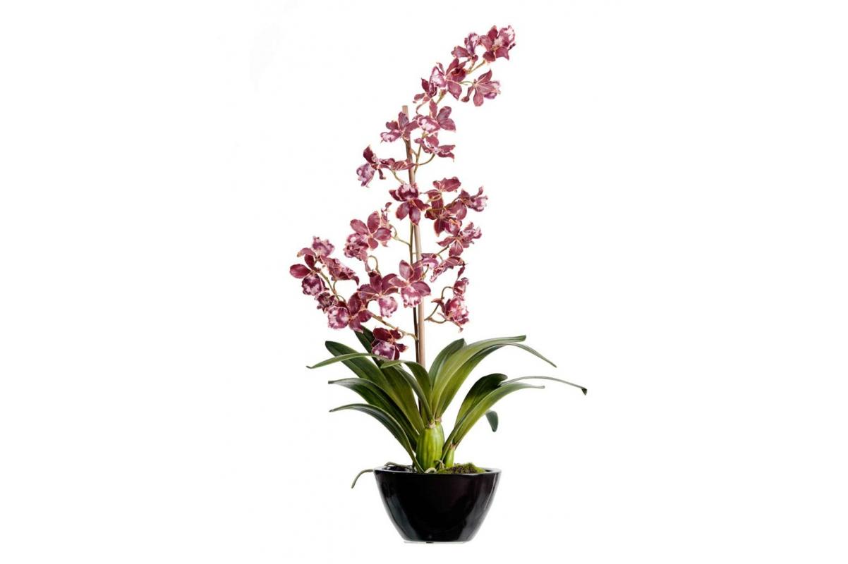 Орхидея Дендробиум искусственная бургундия с белым в кашпо 65 см (Real Touch)