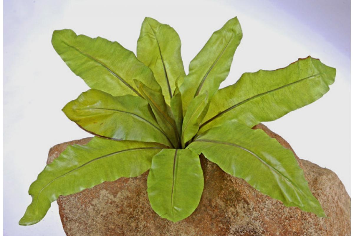Аспениум натуральный искусственный зеленый 70 см - Фото 2