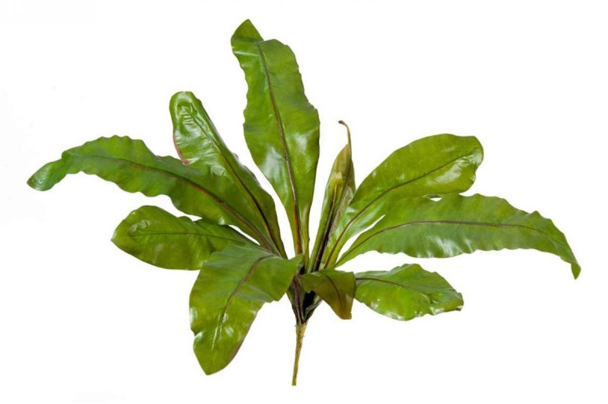 Аспениум натуральный искусственный зеленый 70 см