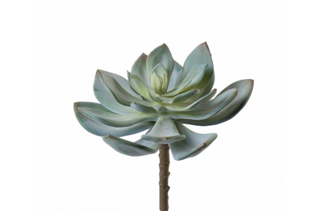 Суккулент Эхеверия Гиббифлора искусственный светло-зеленый припыленный 15 см (Real Touch)