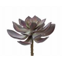 Суккулент Эхеверия Гиббифлора искусственный зелено-бордовый припыленный 15 см (Real Touch)