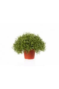 Рясковый мох искусственный в горшке зеленый 15 см