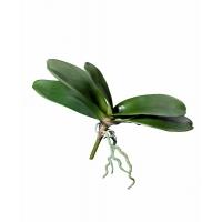 Листья Орхидеи Фаленопсис большие с корнями искусственные зеленые 28 см