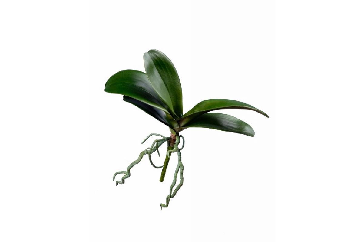 Листья Орхидеи Фаленопсис с корнями искусственные зеленые 25 см