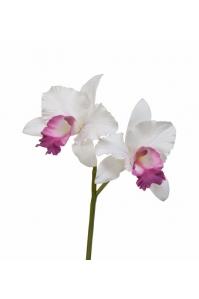 Орхидея Катлея искусственная белая с темно-розовым язычком 29 см (Real Touch)