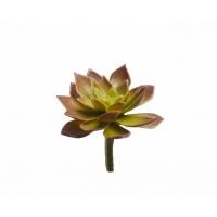 Суккулент Эониум Декорум Минор мини искусственный зелено-бордовый  6 см (Real Touch)