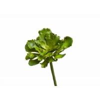 Суккулент Эхеверия Шавиана искусственный зеленый 16 см (Real Touch)