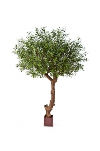 Олива натуральная на толстом стволе искусственная 270 см