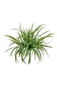 Хлорофитум куст большой искусственный бело-зеленый 45 см
