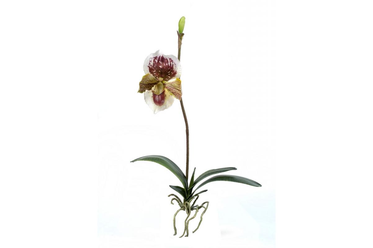 Орхидея Венерин Башмачок с листьями и корнями искусственная бургундия 57 см (Real Touch)