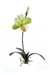 Орхидея Венерин Башмачок с листьями и корнями искусственная белый-лайм 57 см (Real Touch)