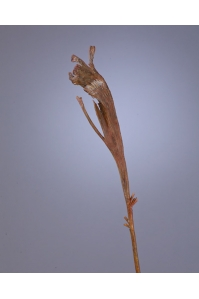 Ветка Салекса искусственная коричневая 55 см
