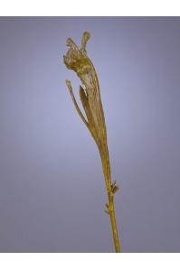 Ветка Салекса искусственная зеленая 55 см