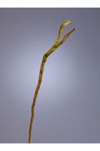 Ветка Салекса искусственная зелено-коричневая 70 см