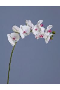 Орхидея Фаленопсис искусственная белая с розовой сердцевинкой ветвь 74 см (Real Touch)