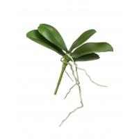 Листья Орхидеи Фаленопсис мини искусственные зеленые 18 см