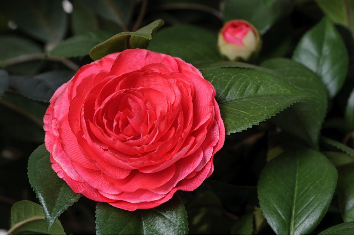 Камелия искусственная на штамбе с розовыми цветами - Фото 2