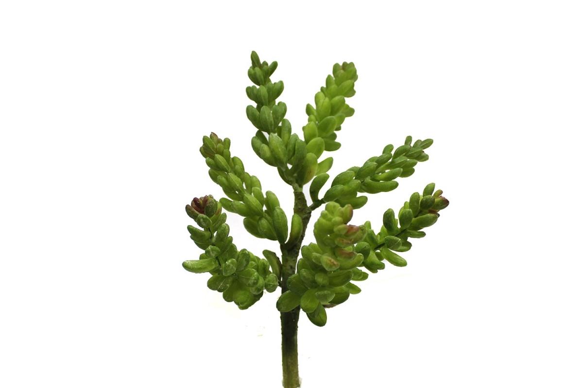 Суккулент Крассула искусственный зелено-красный 20 см
