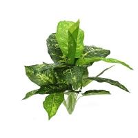 Диффенбахия пестрая искусственная зелено-белая куст 60 см