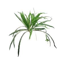 Хлорофитум куст искусственный зелено-белый 40 см