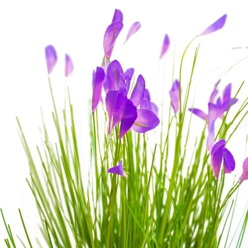Трава Ракитник искусственный зелено-фиолетовый в кашпо ящик 61 см - Фото 4
