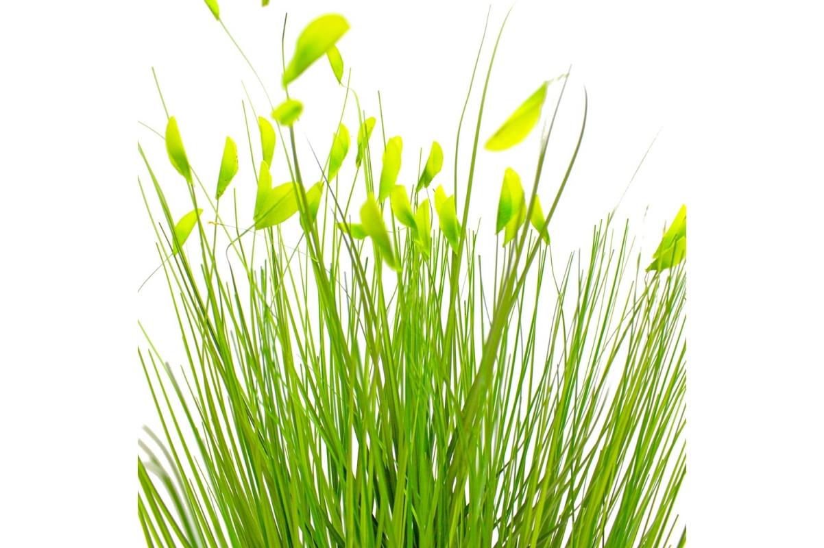 Трава Ракитник искусственный зеленый в кашпо ящик 61 см - Фото 4