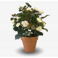 Роза кустовая искусственная в кашпо кремовая 35 см