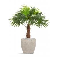Пальма Вашингтония искусственная в бежевом кашпо 150 см