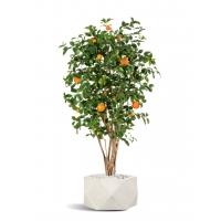 Апельсиновое дерево искусственное с плодами в бежевом кашпо 180 см