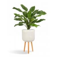 Спацифилум Гигант искусственный без цветов в бежевом кашпо 150 см