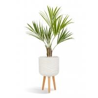 Пальма Кентия (Ховея) искусственная в бежевом кашпо 165 см
