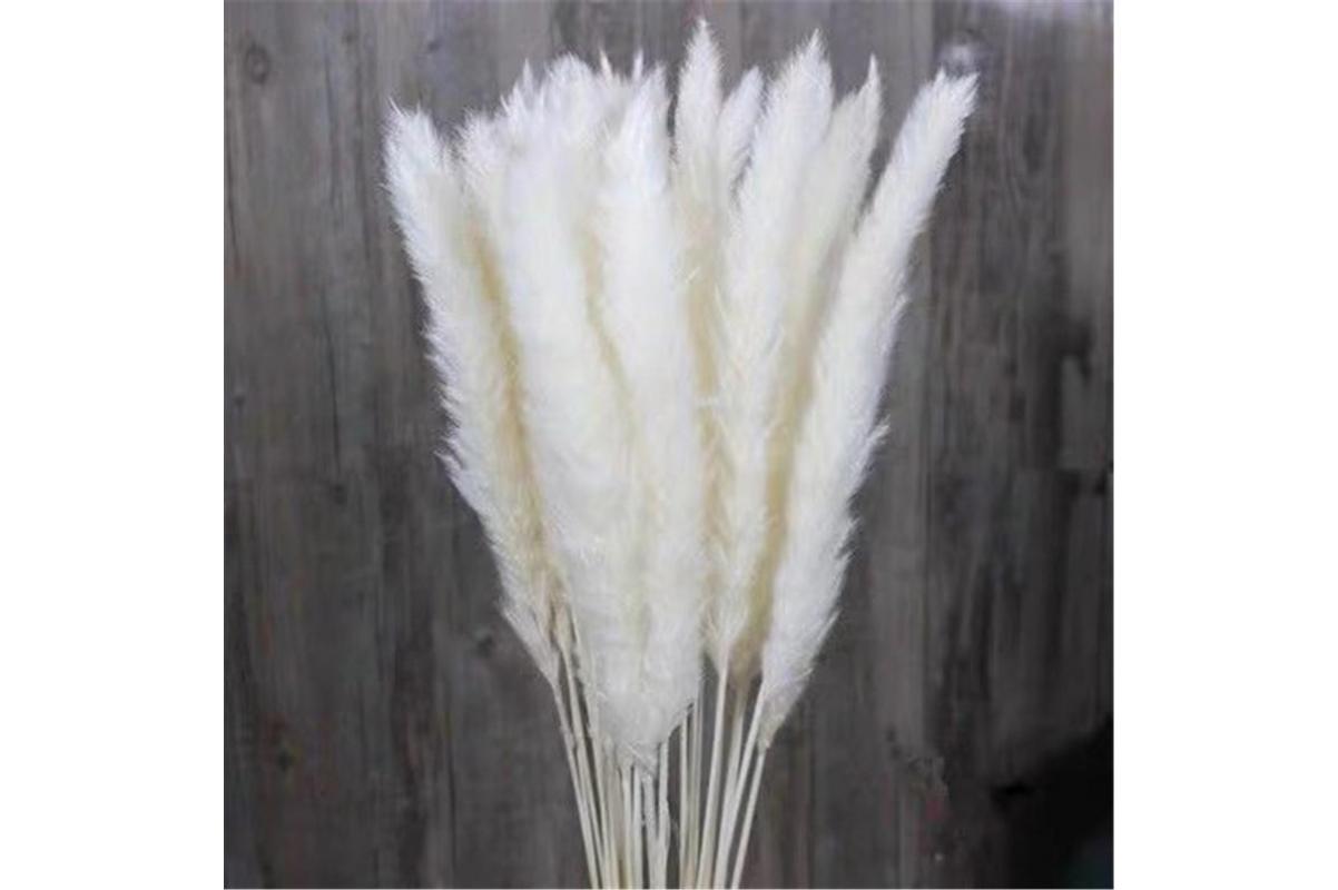 Пампасная трава (кортадерия) белая 12 колосков 83 см - Фото 5