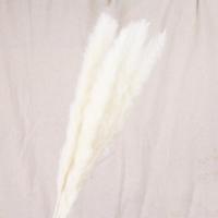 Сухоцвет - Пампасная трава (кортадерия) белая 12 колосков 83 см