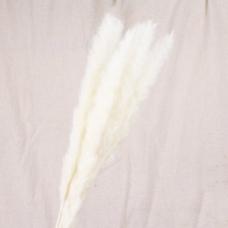 Пампасная трава (кортадерия) белая 12 колосков 83 см