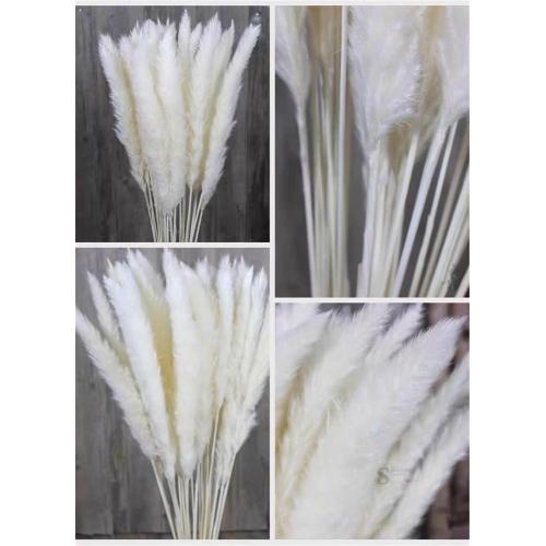 Пампасная трава (кортадерия) белая 12 колосков 83 см - Фото 12