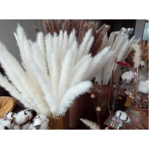 Пампасная трава (кортадерия) белая 12 колосков 83 см - Фото 4